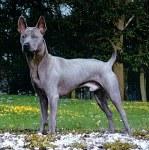 Soi Dog Fondation