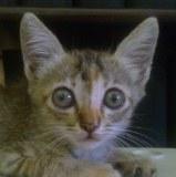 Con mèo con thật may mắn được cứu sống, lúc đó Lorena đang hấp hối trong cơn mưa tầm tã