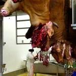 Lò giết mổ hoặc phòng tra tấn